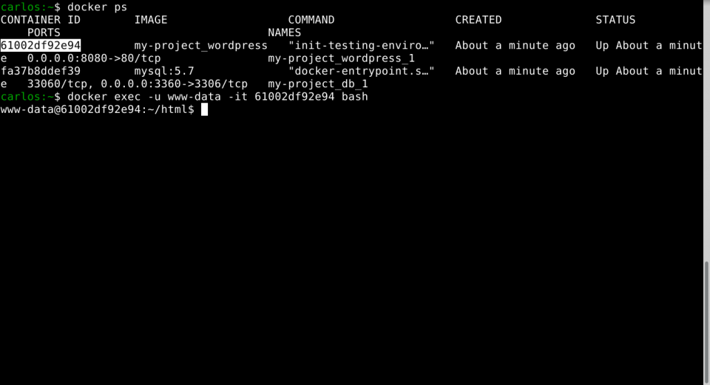 bash session in the docker container